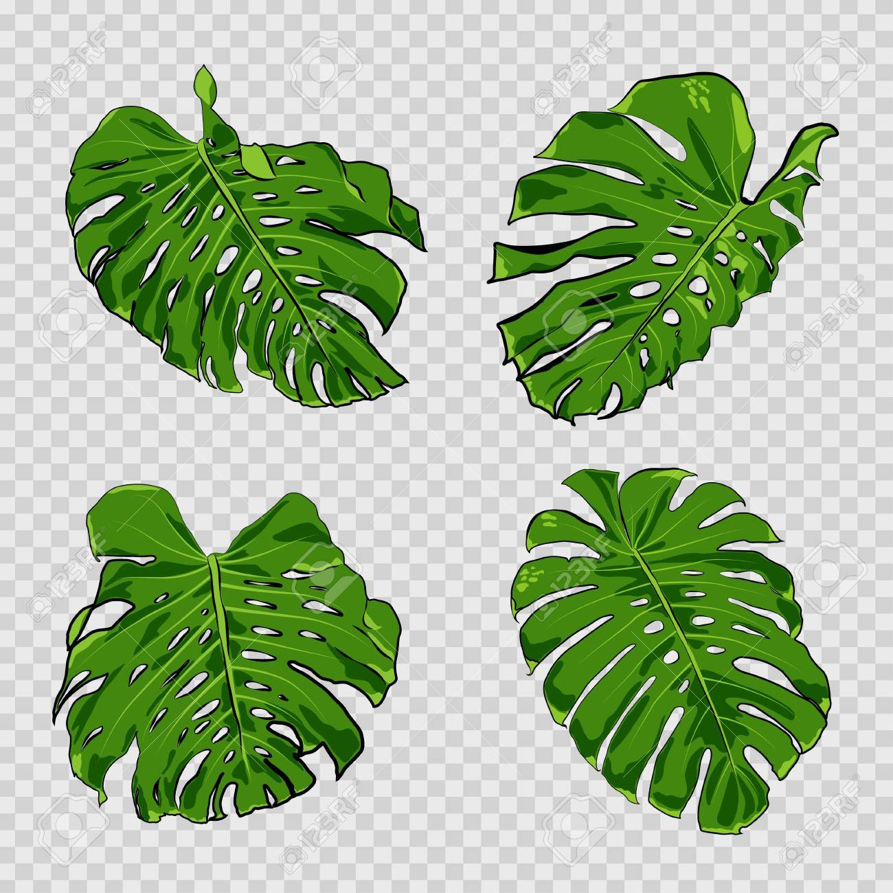 Vector Tropical Palm Leaves Jungle Leaves Set Isolated On Transparent Royalty Free Cliparts Vectors And Stock Illustration Image 85565674 Vector illustration of realistic tropical shadow overlay effect. vector tropical palm leaves jungle leaves set isolated on transparent