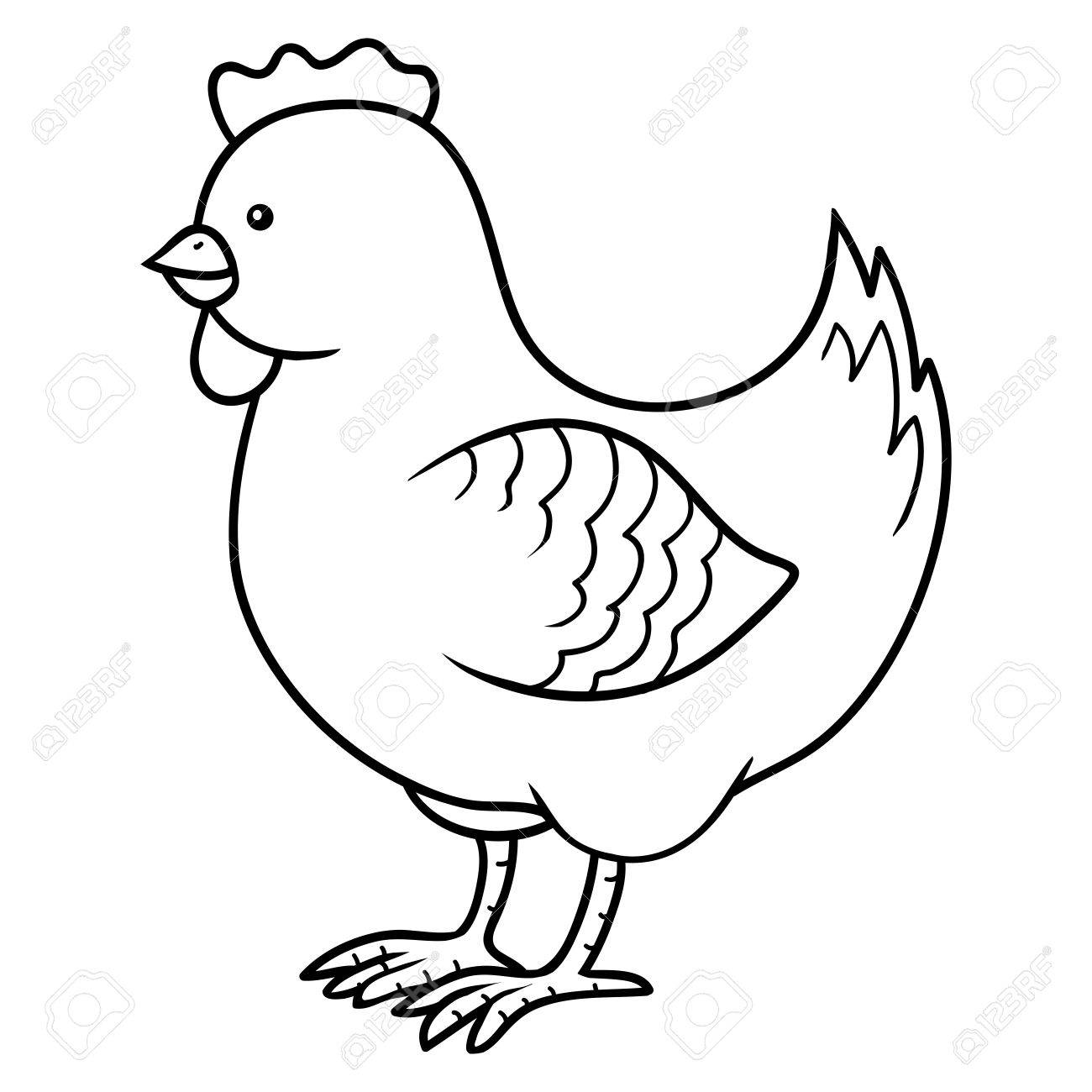 coloring book chicken royalty free cliparts vectors and stock