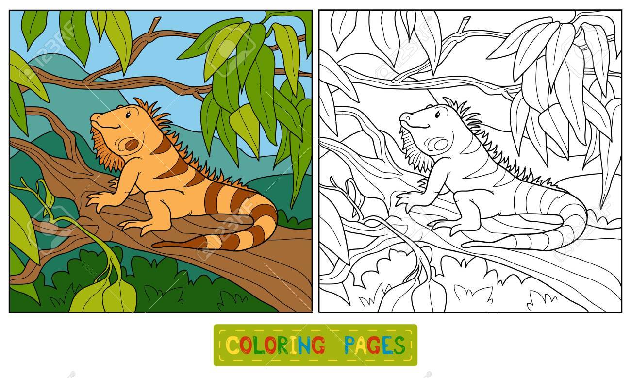 Coloring Book (iguana) Royalty Free Cliparts, Vectors, And Stock ...