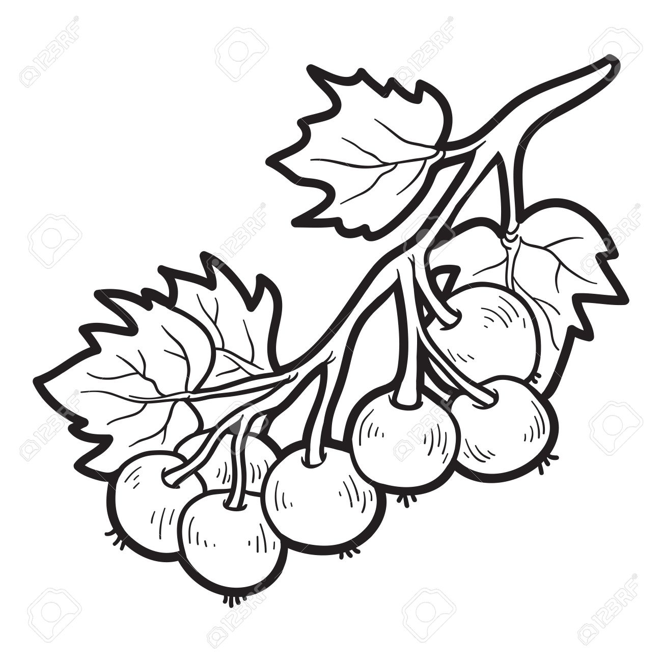 Coloring book pictures of vegetables - Coloring Book For Children Fruits And Vegetables Black Currants Stock Vector 41918422
