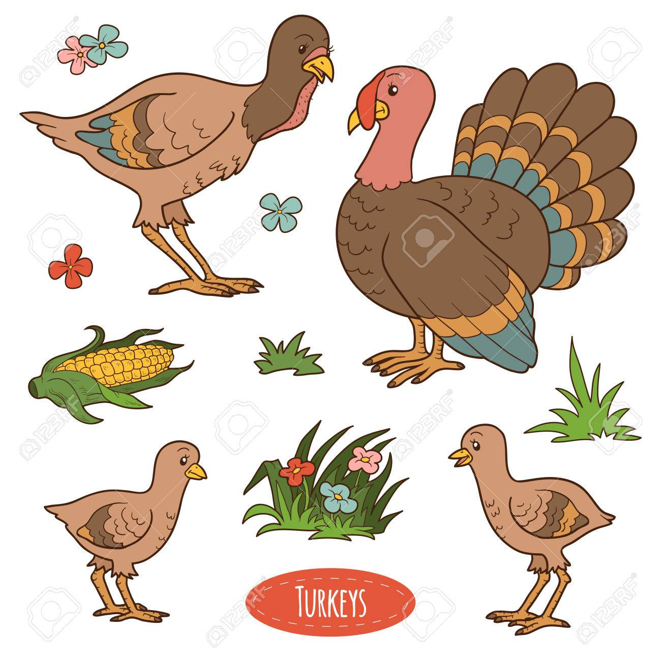 Selecting the most suitable breed of turkeys for