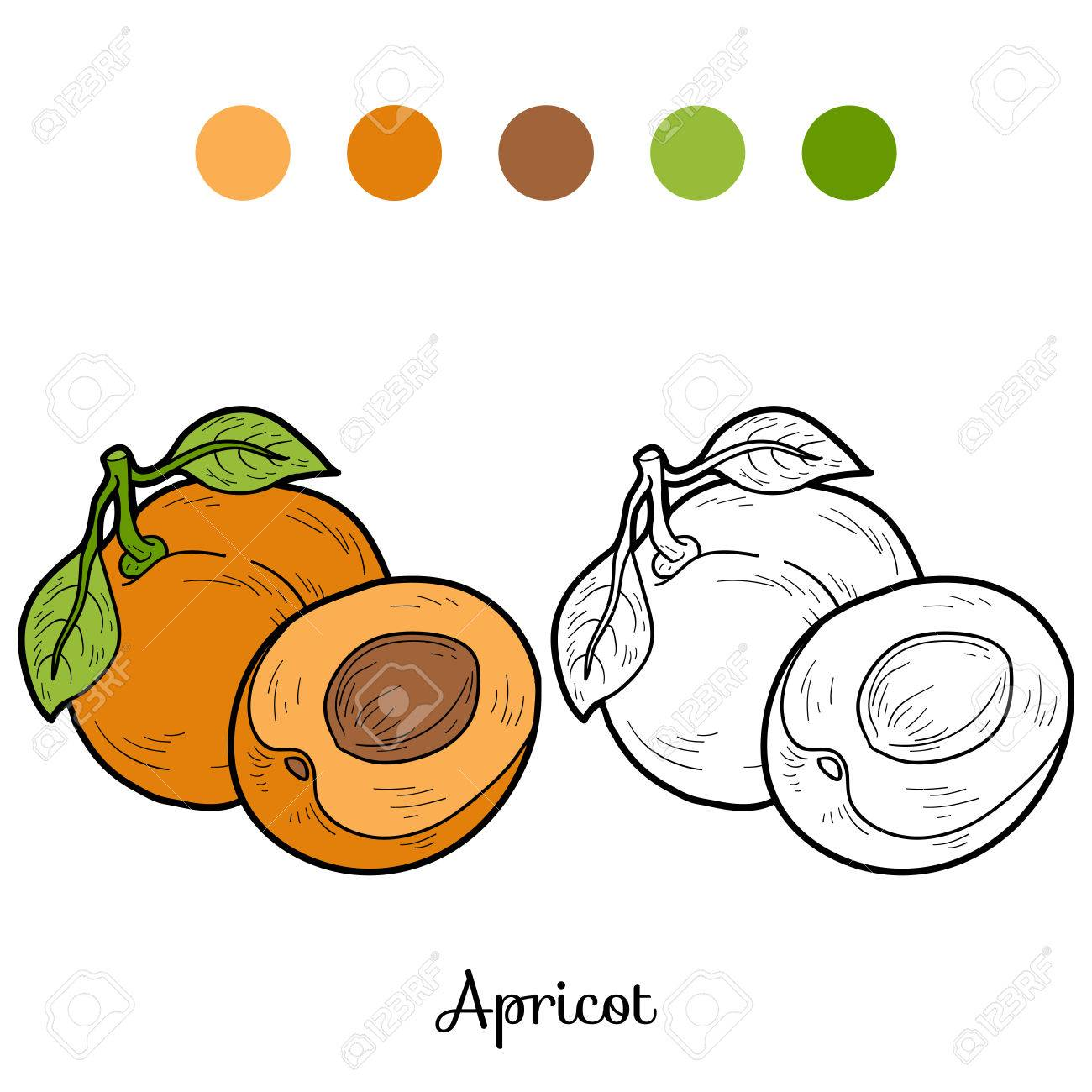 Coloring Book Fruits And Vegetables Apricot