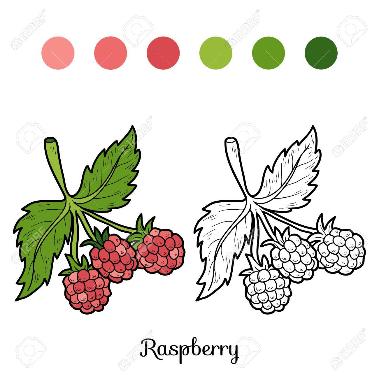 Coloring Book For Children Fruits And Vegetables Raspberry Stock Vector