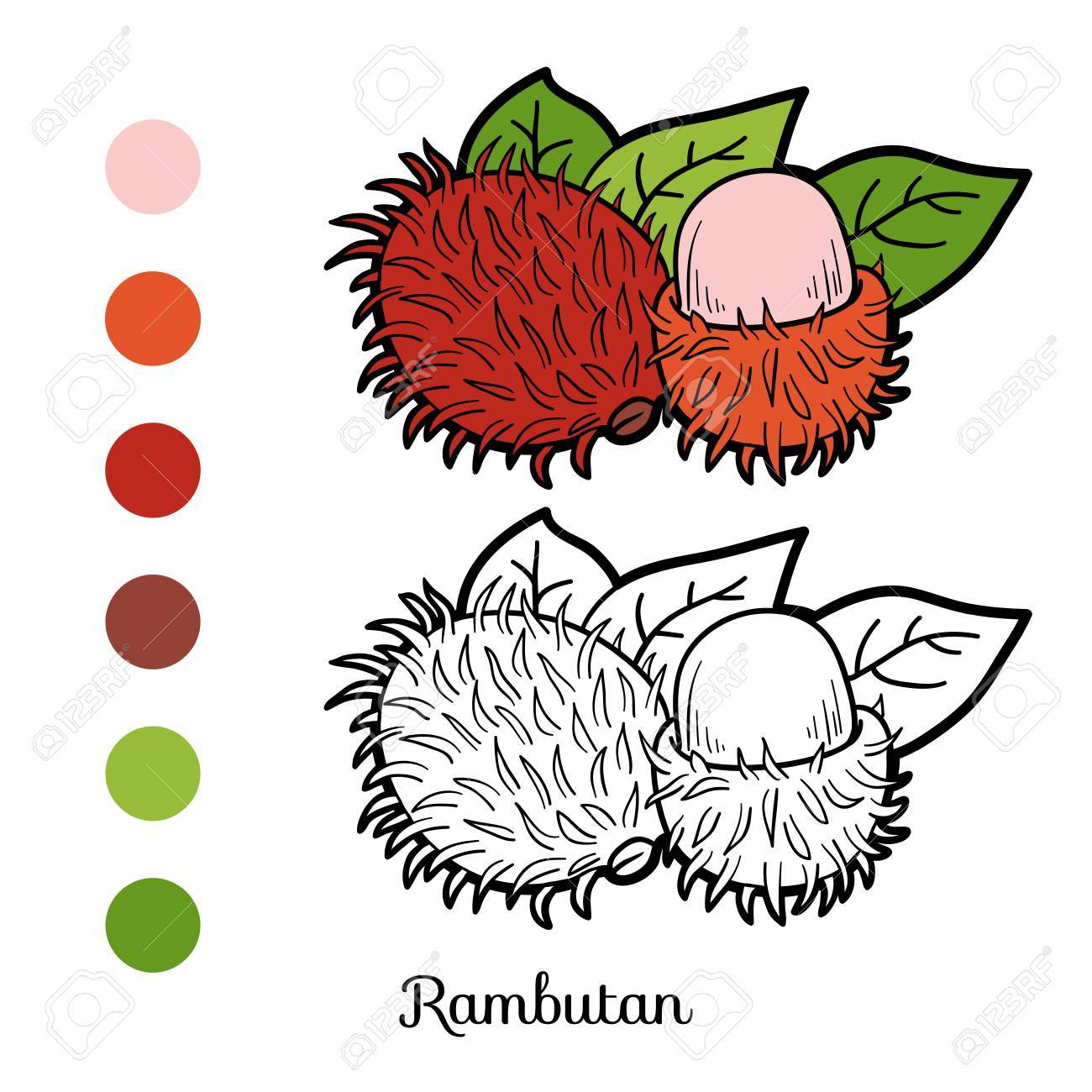 Coloring Book Game For Children: Fruits And Vegetables (rambutan ...