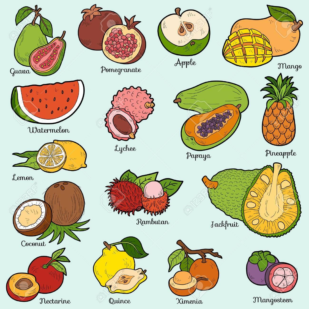 Color Fijo Con Frutas Tropicales Pegatinas De Dibujos Animados De