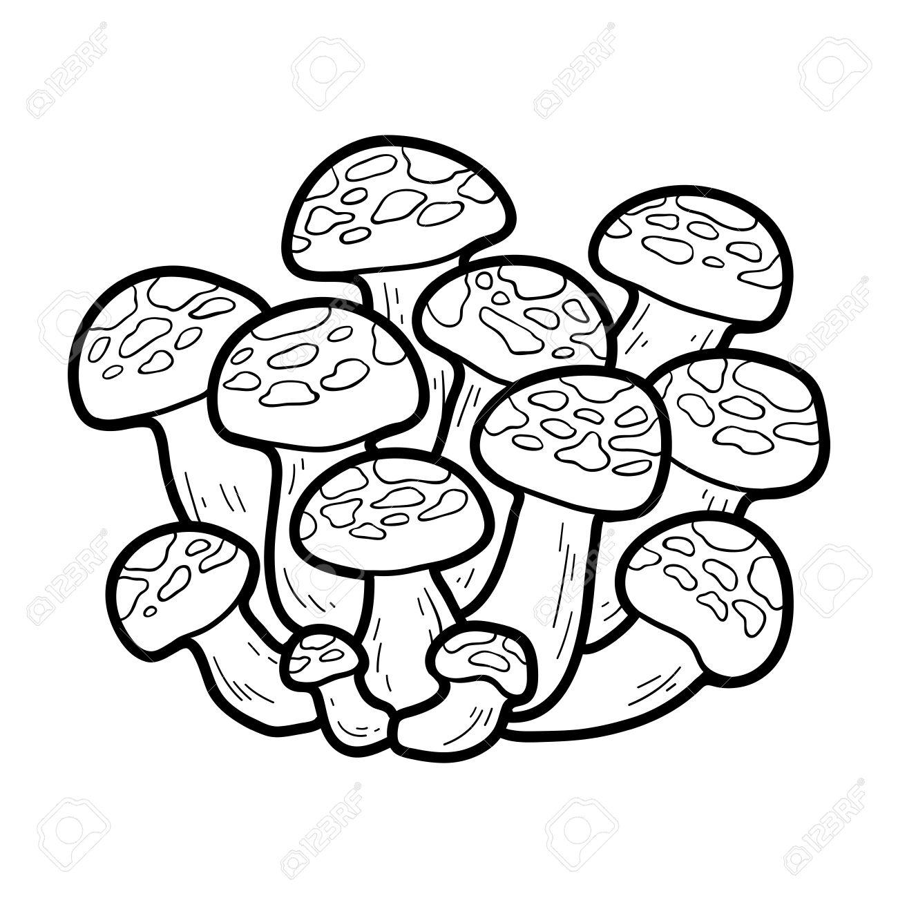 Malbuch Für Kinder. Japanische Essbare Pilze, Bunashimeji Lizenzfrei ...