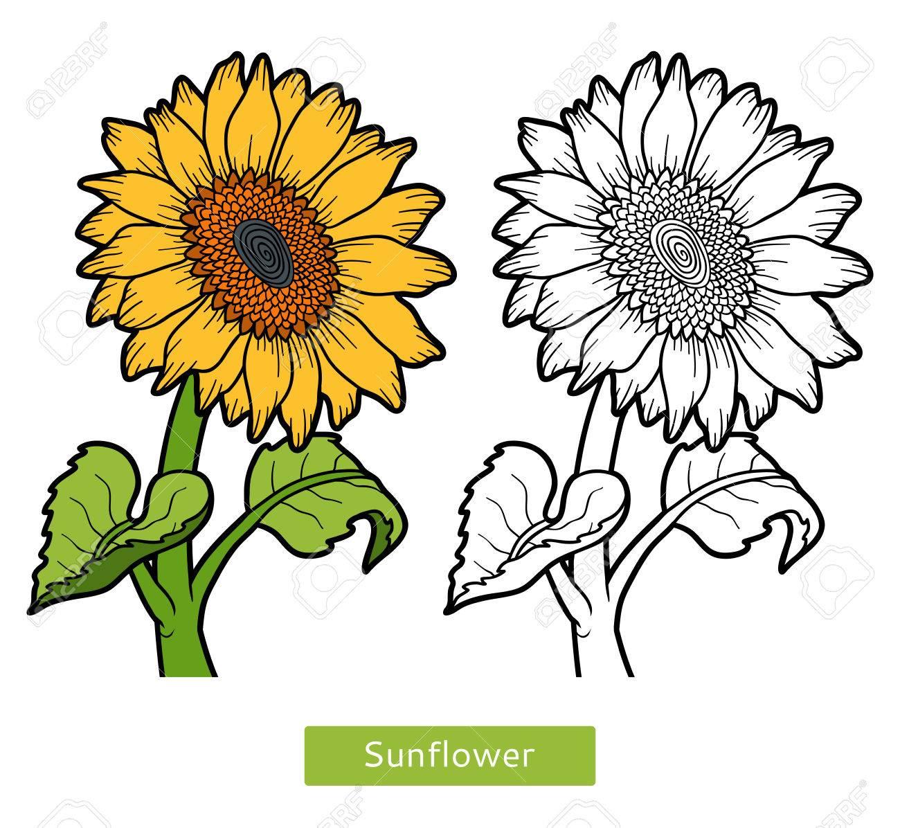 ひまわりの花の子供のための塗り絵のイラスト素材ベクタ Image 64872602
