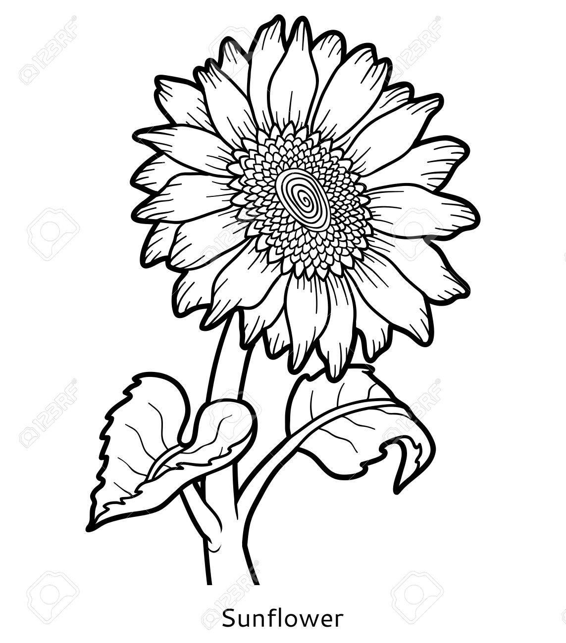 ひまわりの花の子供のための塗り絵のイラスト素材ベクタ Image 64872609