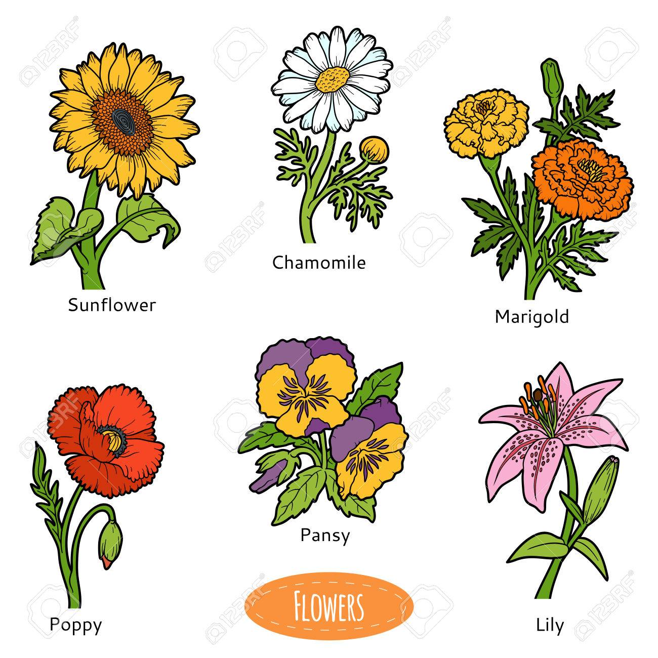 Vector set of flowers color nature collection royalty free cliparts vector set of flowers color nature collection stock vector 67149824 voltagebd Image collections