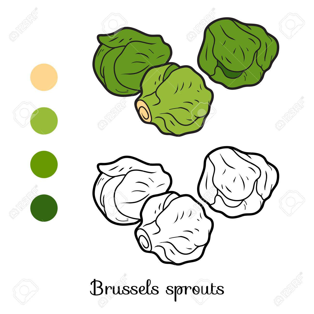 Coloring Book For Children, Vegetables, Brussels Sprouts Royalty ...