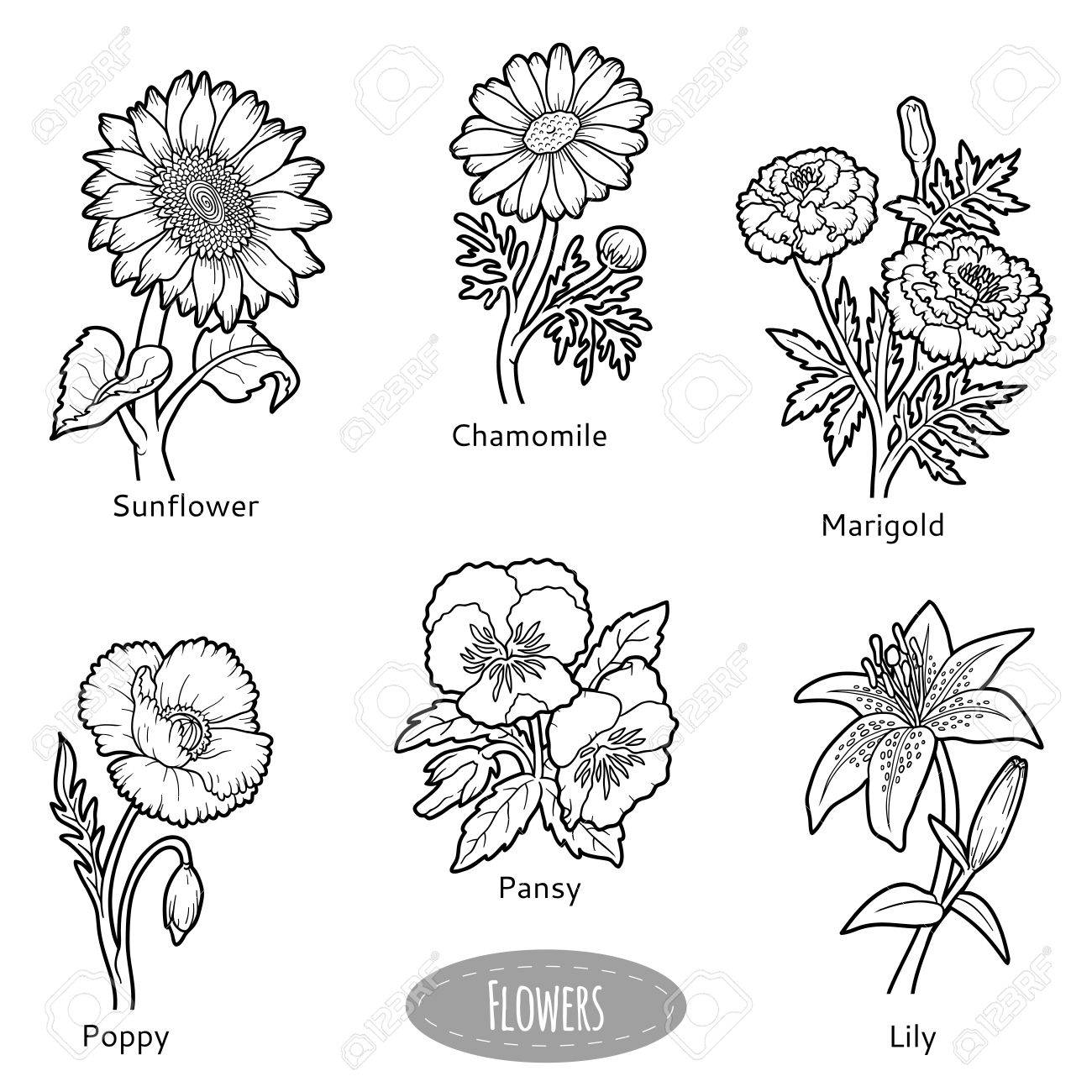 Vector Set Of Flowers Black And White Nature Collection Royalty