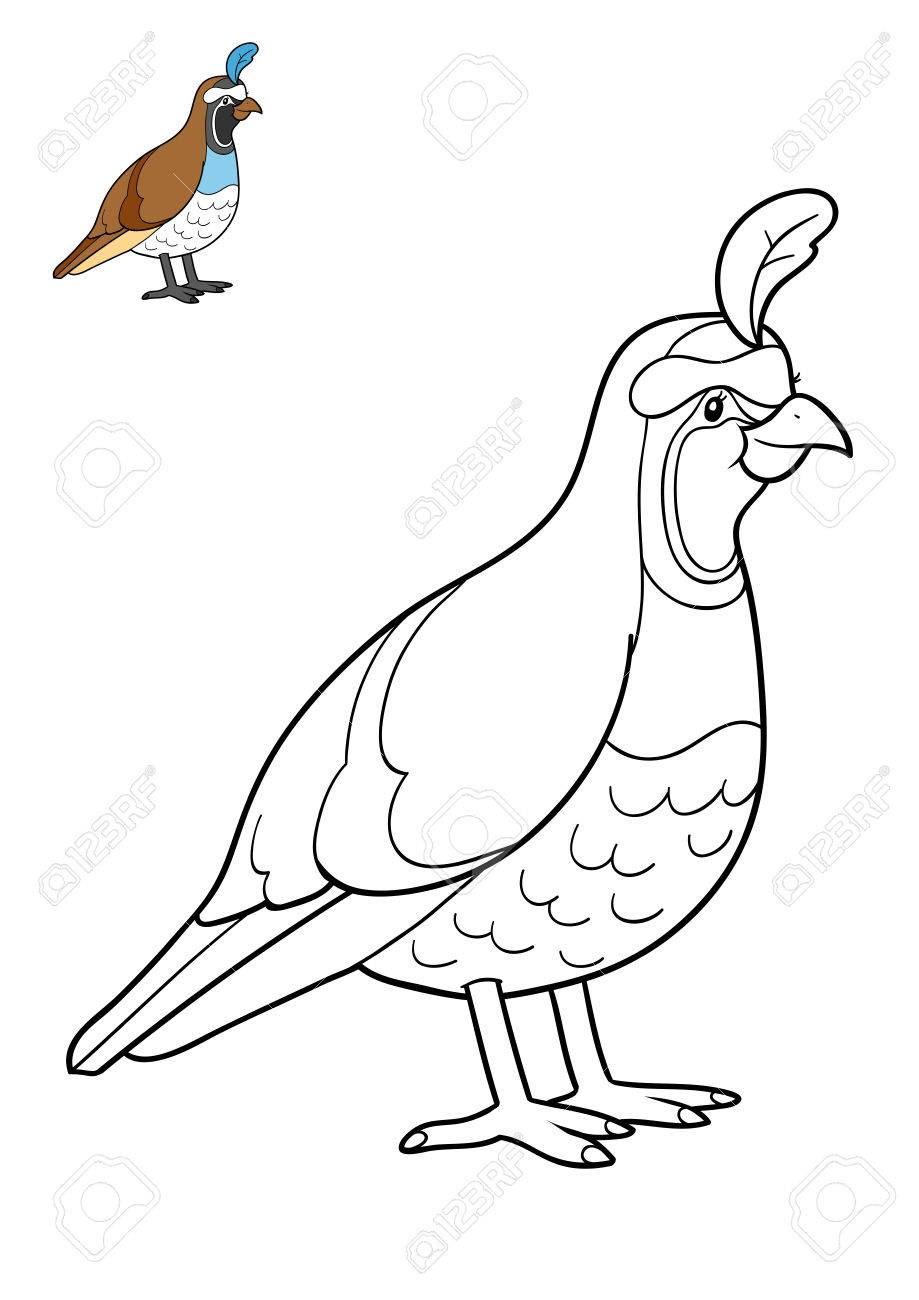 Coloring Book For Children Quail Stock Photo Picture And Royalty Free Image Image 70382207