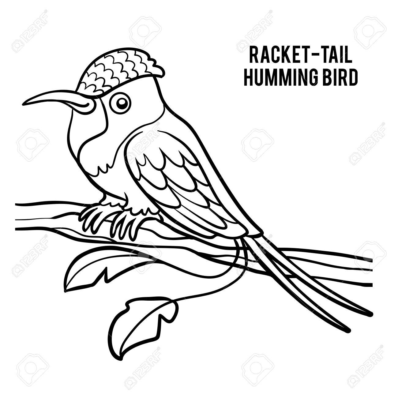 Dibujo Para Colorear Para Niños Colibrí Cola Hummingbird