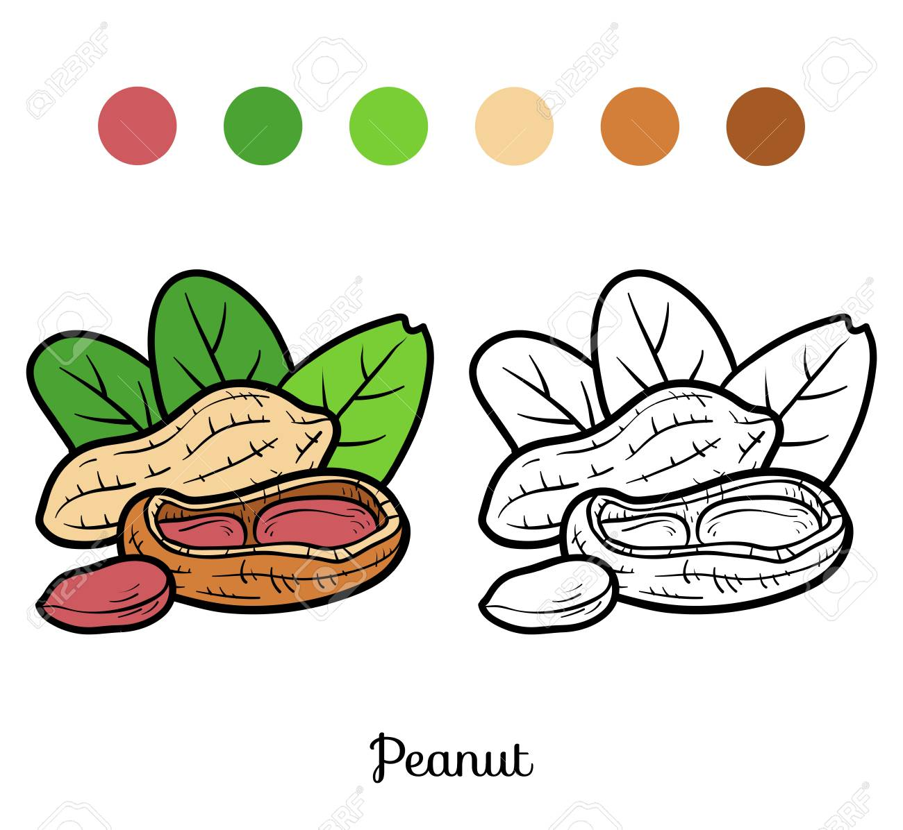 coloring book for children peanut royalty free cliparts vectors