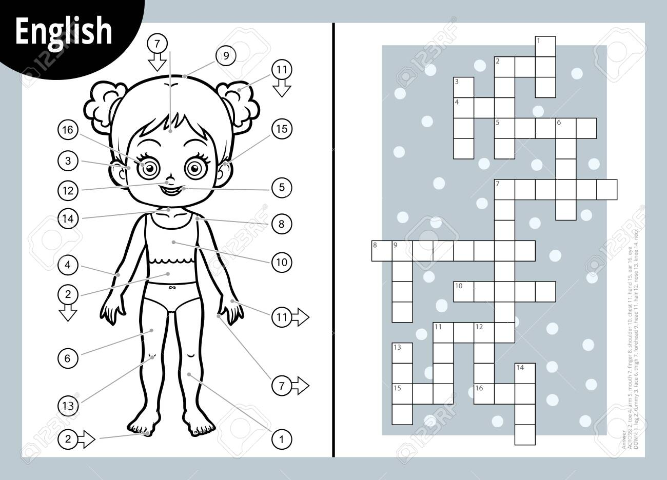 Vector black and white crossword in English, education game for children about the human body. My body parts for a girl. - 131883902