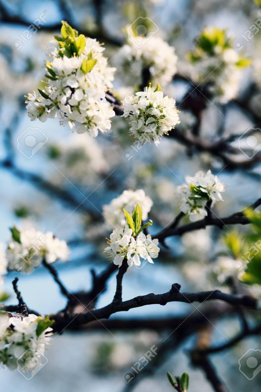 fond de fleur de printemps. arbre fleur. impression printanière