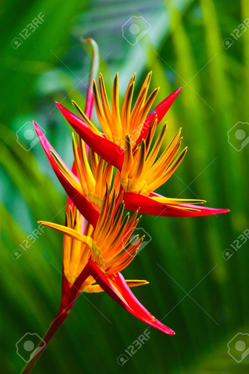 Bird Of Paradise Flower On Blured Background Of Palm Tree Leaves