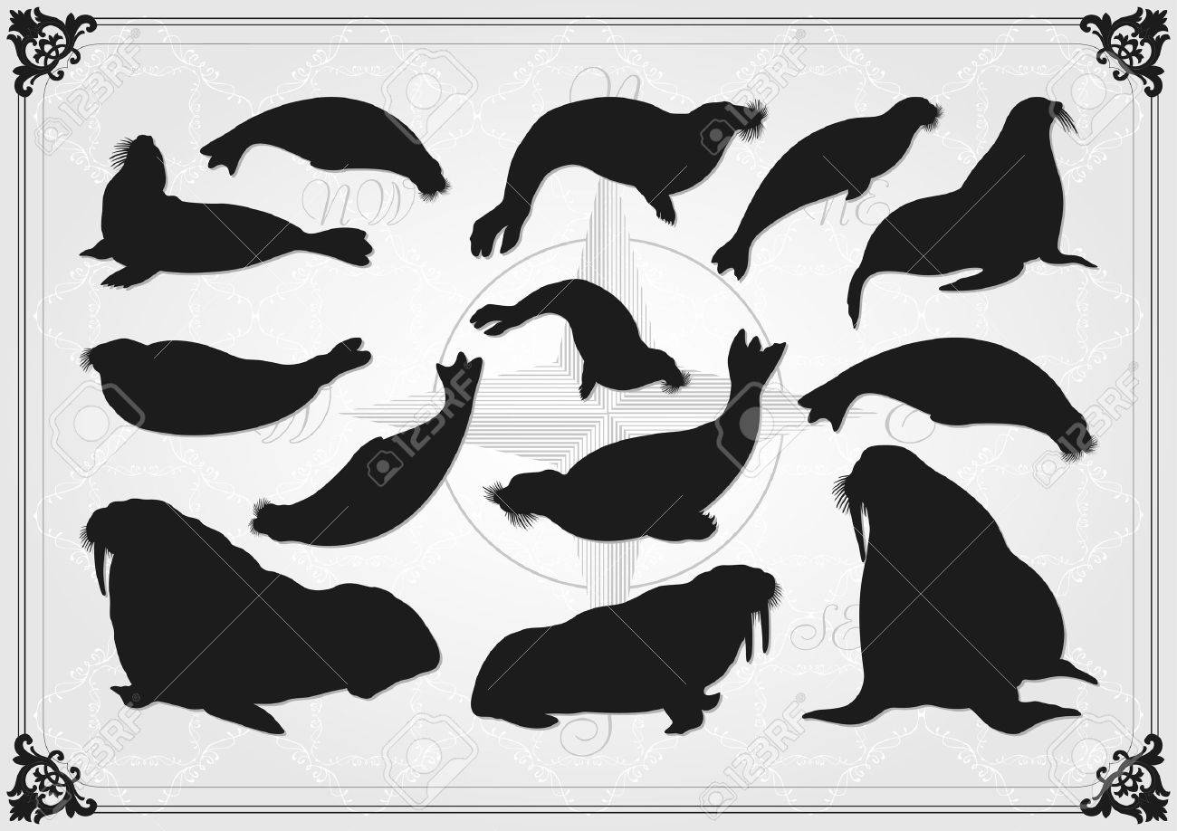 Sea lion and seal illustration collection background Stock Vector - 11649915