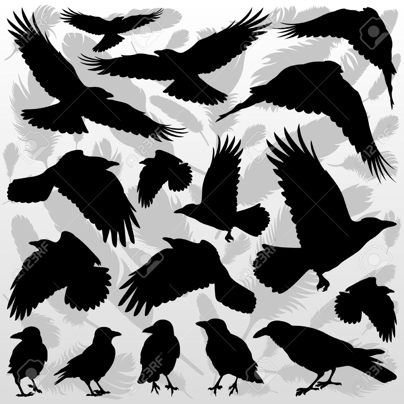 Crow and feathers silhouettes illustration collection background vector Stock Vector - 12484775