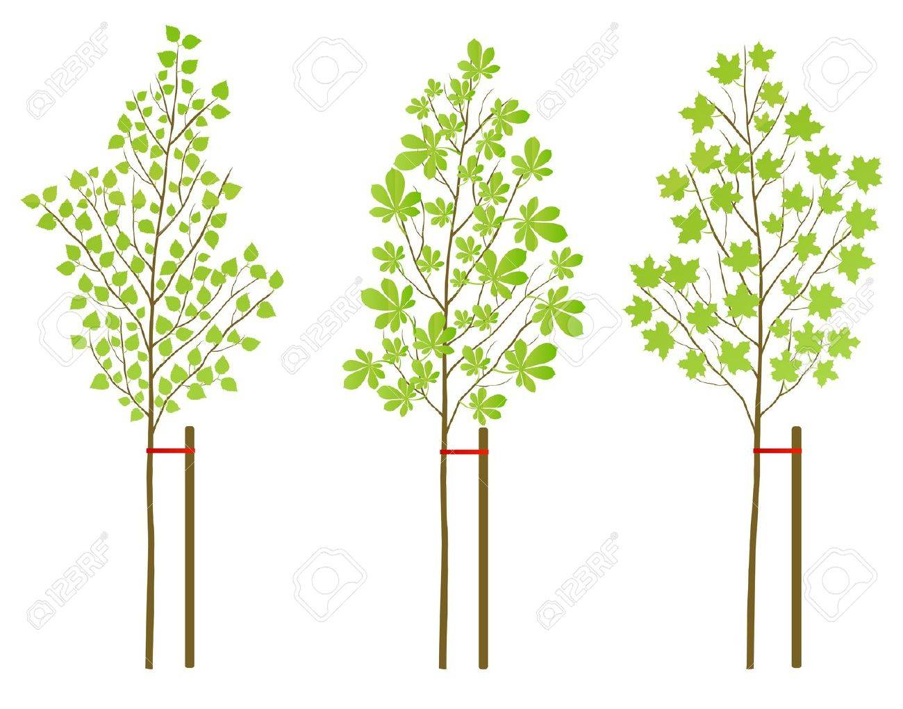 Chestnut, maple and birch tree plants background set for poster Stock Vector - 13412303