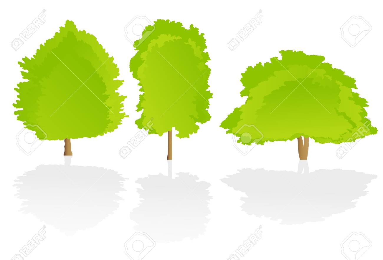 Trees detailed illustration collection background vector Stock Vector - 15794994