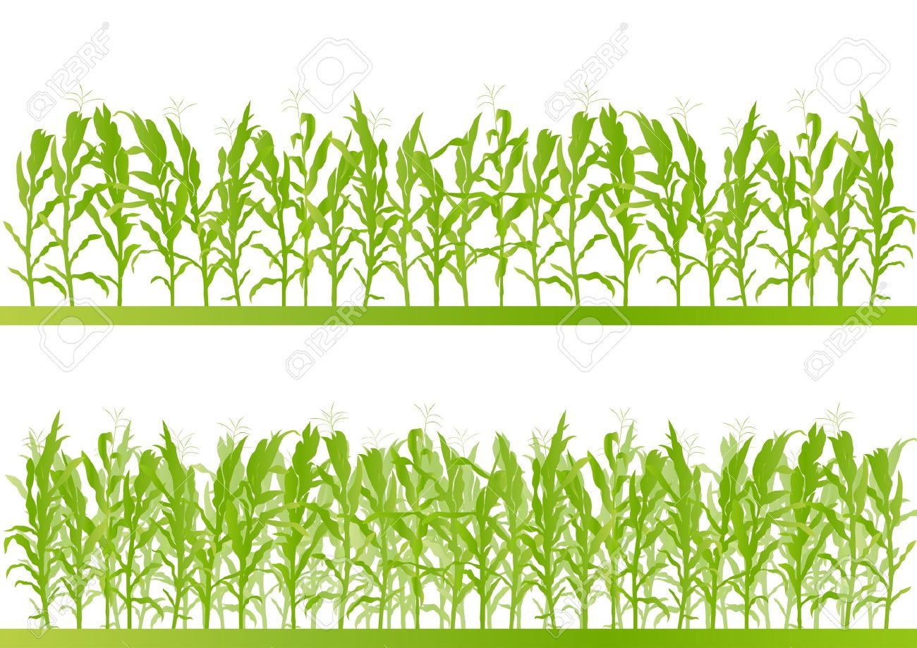 Corn field detailed countryside landscape illustration background vector - 21445918