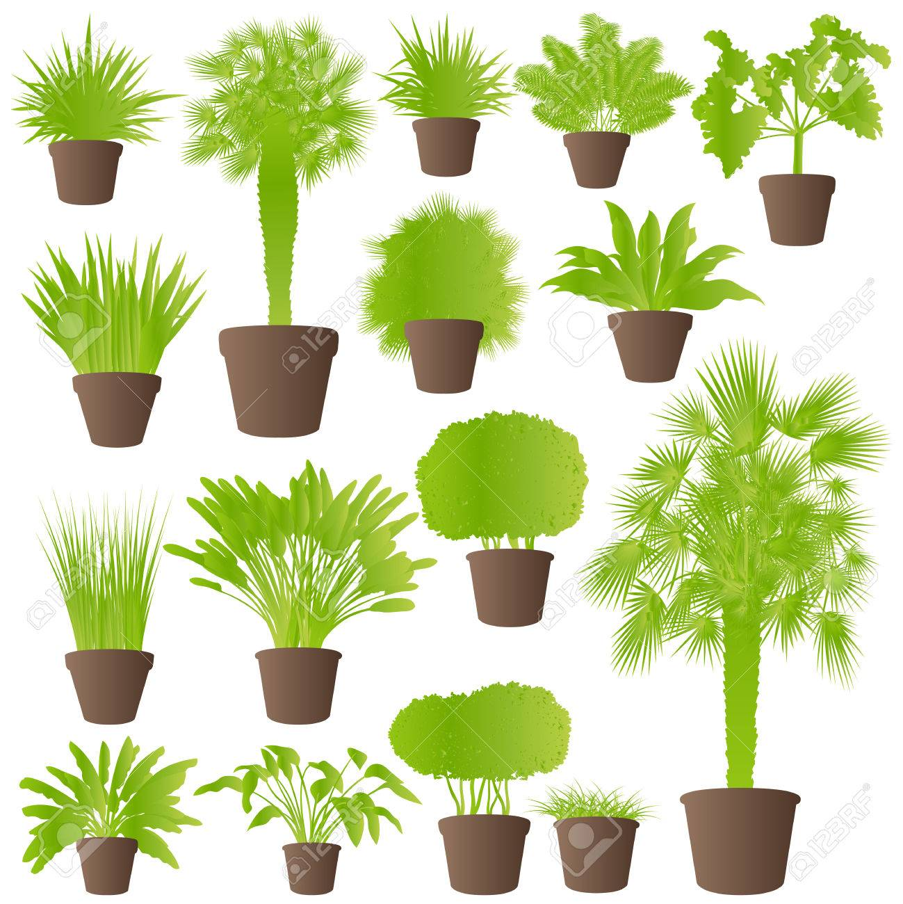Exotic jungle bushes grass, reed, palm tree wild plants set vector background concept house plants for poster Stock Vector - 24474998