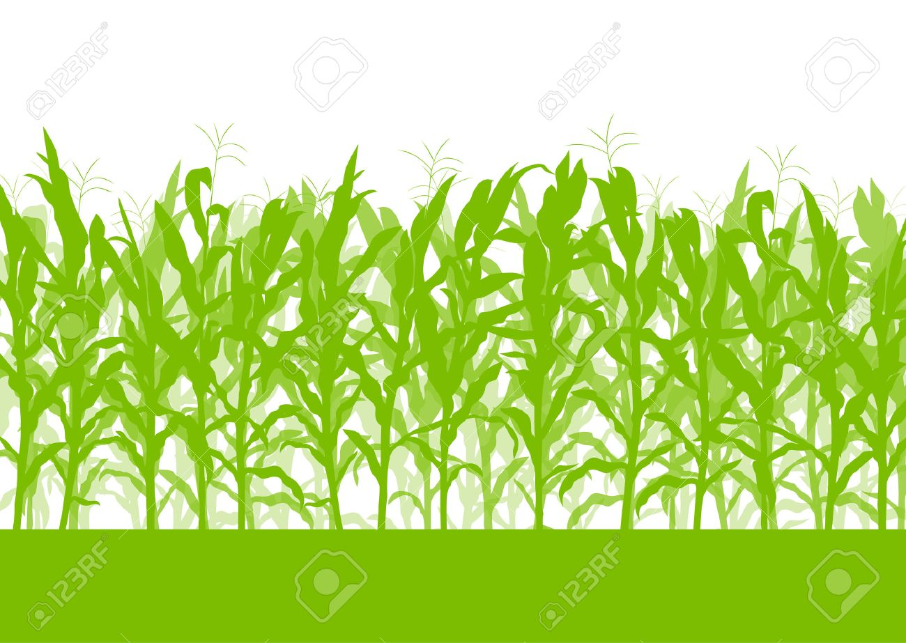 Corn field vector background ecology green concept for poster - 37765230
