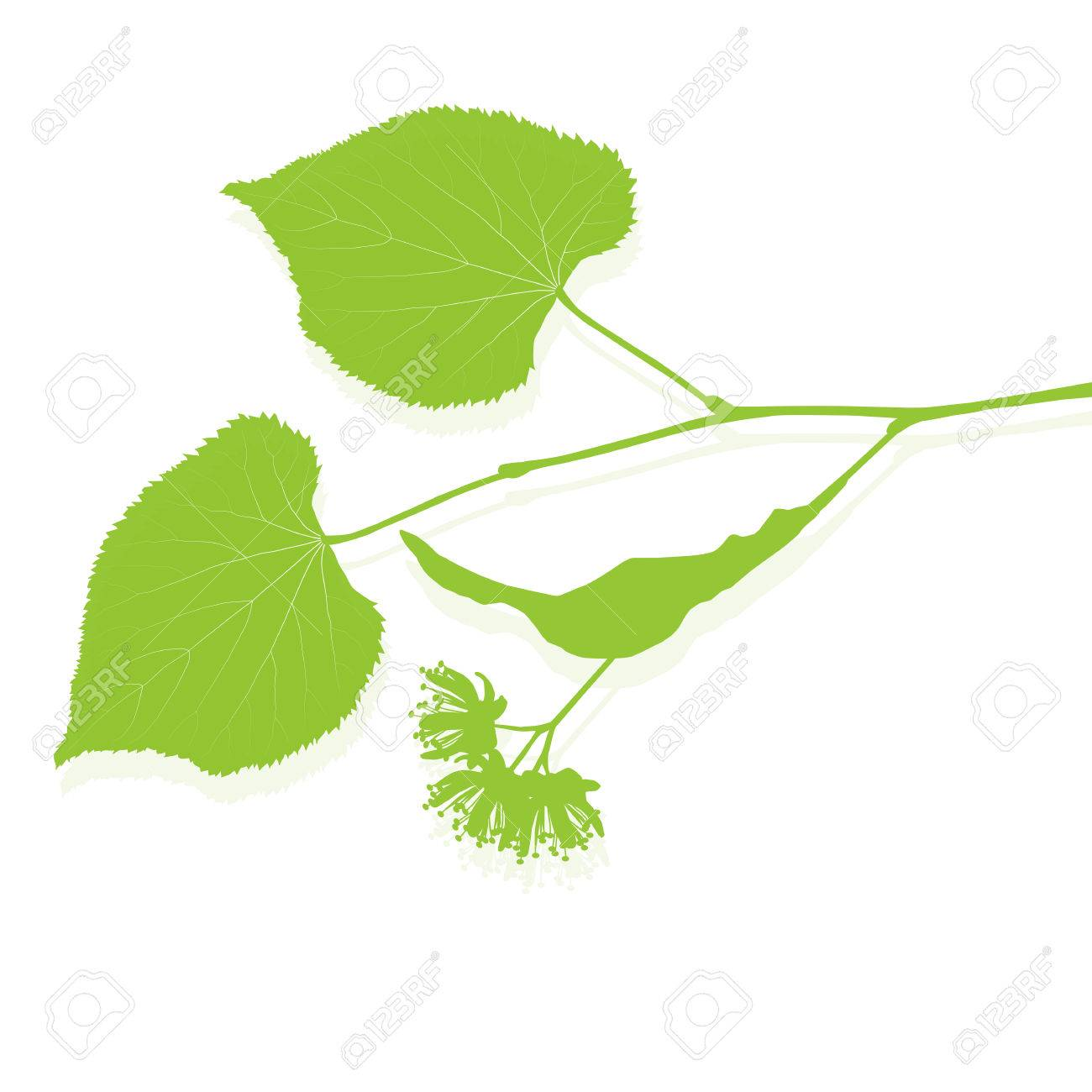 Linden flowers ecology background vector abstract illustration - 61922137