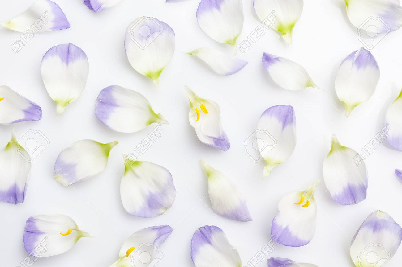 Floral background white and purple flower petals on white background floral background white and purple flower petals on white background from above stock photo 52333895 mightylinksfo