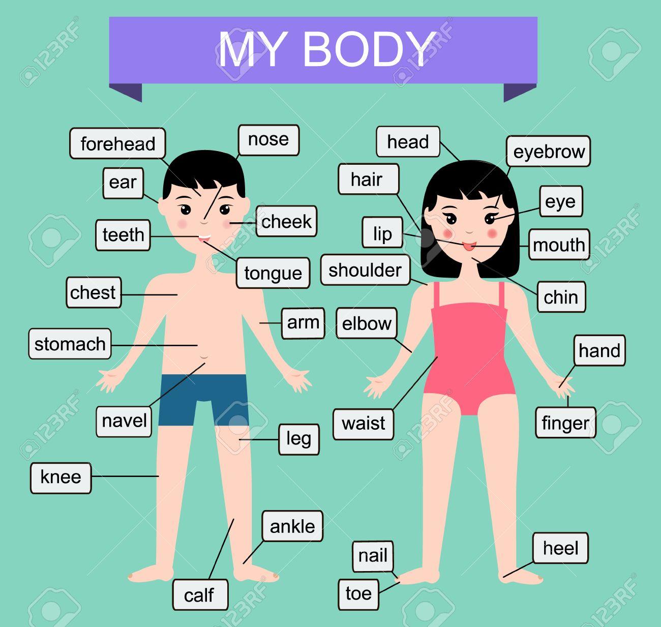 Mi Cuerpo. Aprender Partes Del Cuerpo Humano. Ilustración Vectorial ...