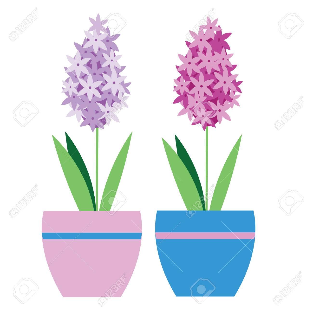 Usine De Jacinthe Isole Dans Un Pot De Fleurs Vector Illustration