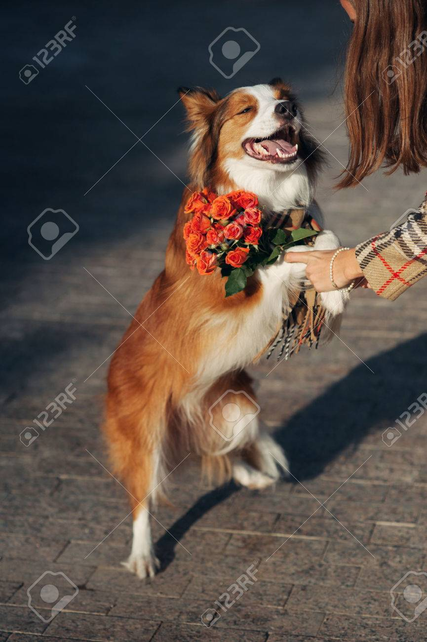 Girl Gives Dog A Bouquet Of Flowers In The Autumn Stock Photo