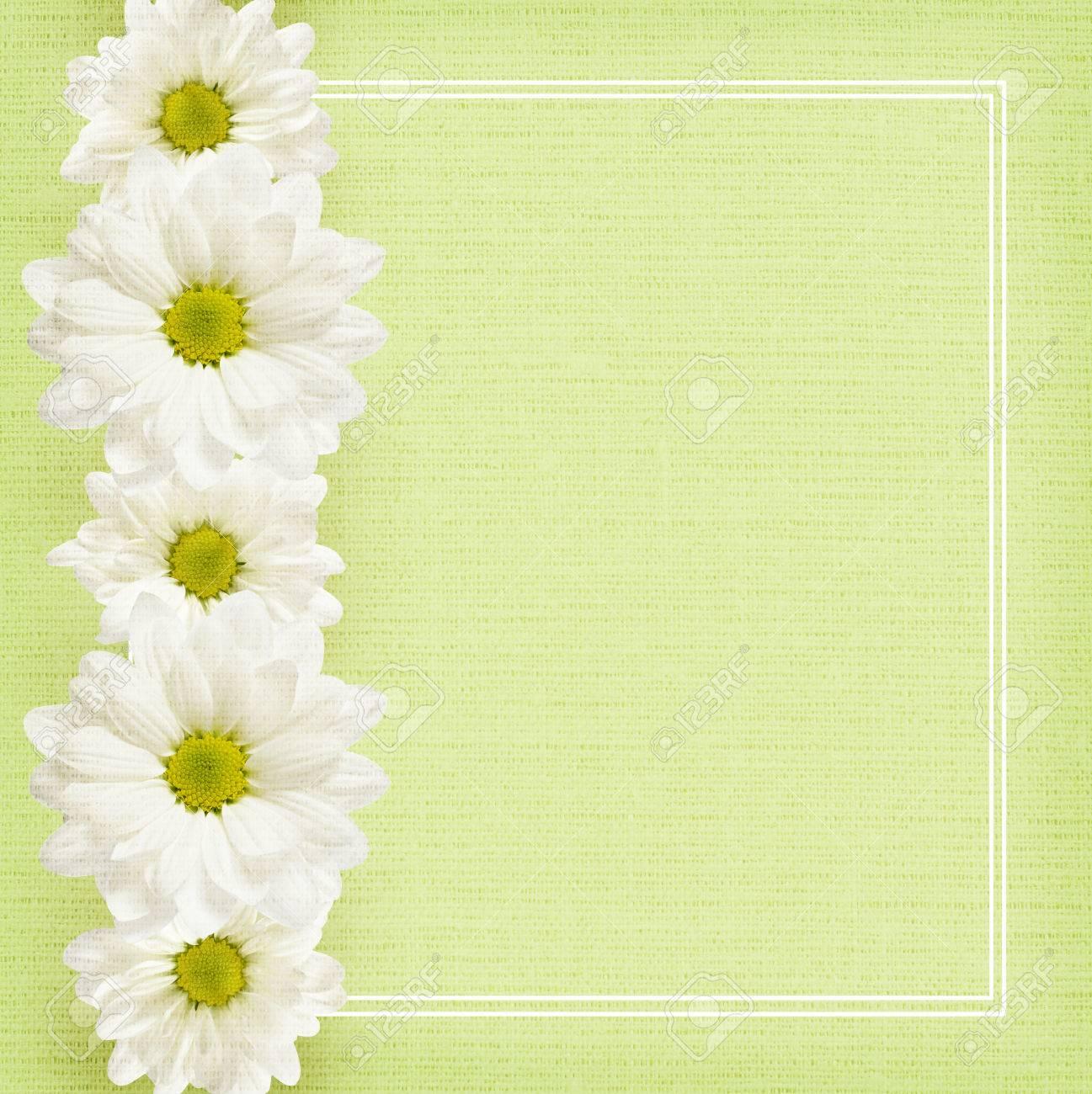Fondo Verde Con Flores De Margarita Línea Y El Marco Fotos, Retratos ...