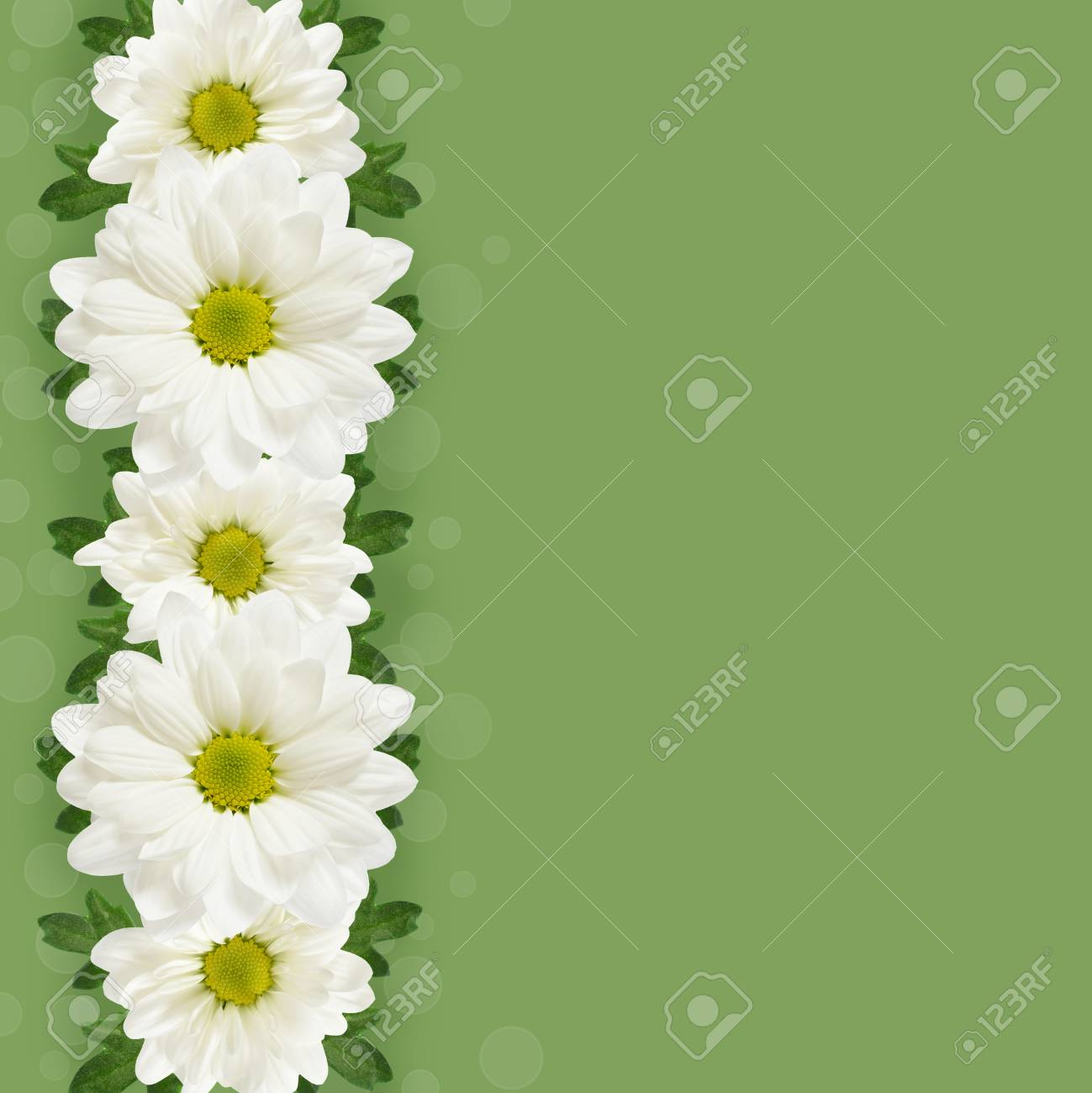 Daisy flowers line on green background stock photo picture and daisy flowers line on green background stock photo 26724484 izmirmasajfo