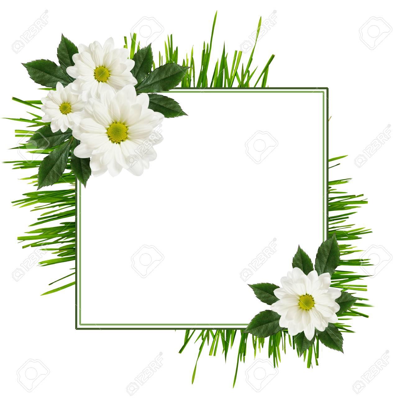 Flores De La Margarita Disposición Y Un Marco En Blanco Fotos ...