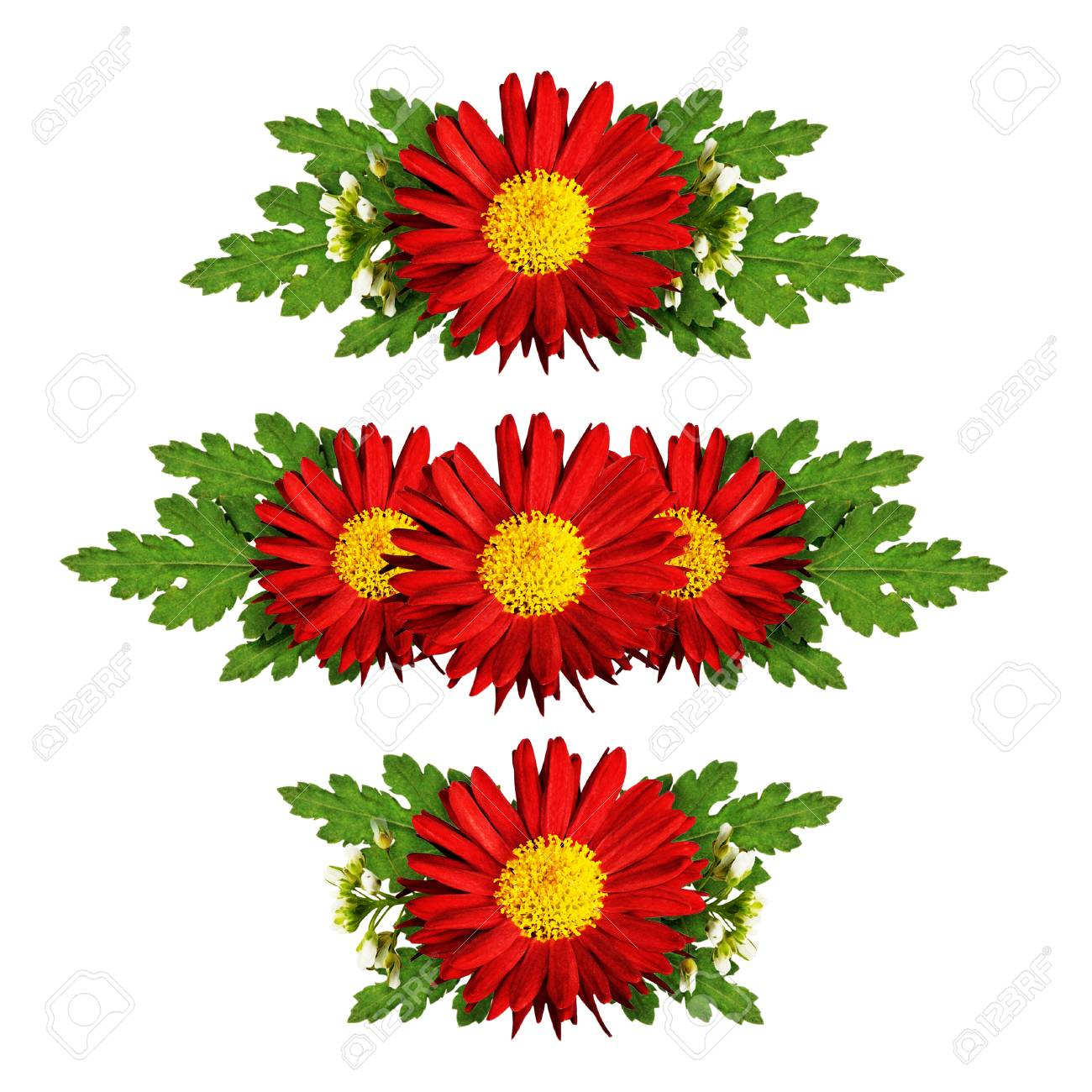 Red aster flowers compositions isolated on white stock photo red aster flowers compositions isolated on white stock photo 47587945 mightylinksfo
