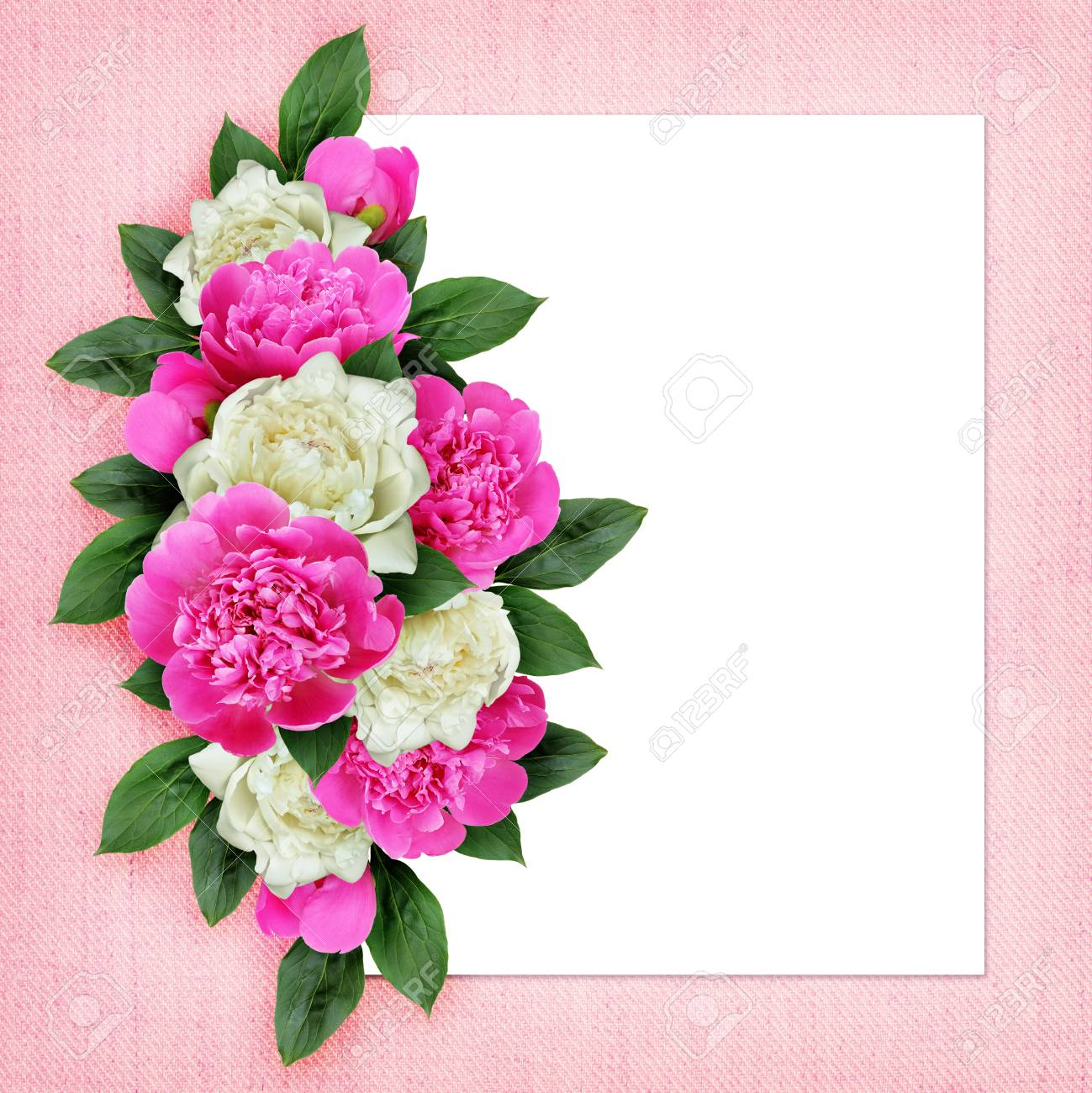 Pink and white peonies flowers arrangement on white and pink stock pink and white peonies flowers arrangement on white and pink background stock photo 65316173 mightylinksfo