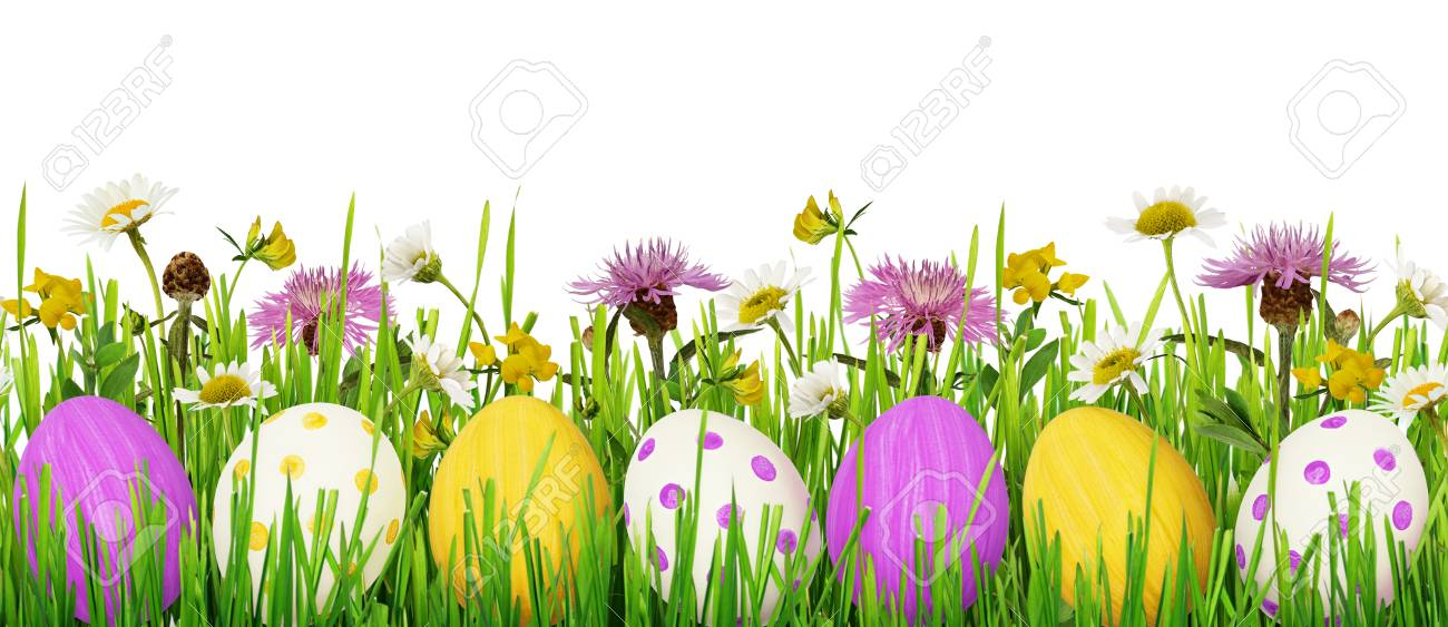 grass and flowers border. Exellent Flowers Easter Eggs Grass And Wild Flowers Border On White Background Stock Photo   74266031 Throughout Grass And Flowers Border Z