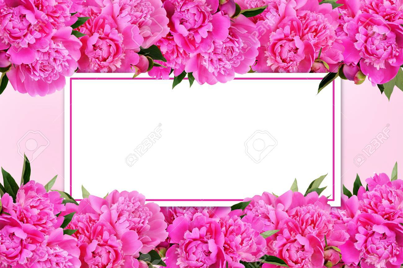 Pink peony flowers borders and a card on pink background stock photo pink peony flowers borders and a card on pink background stock photo 76387988 mightylinksfo