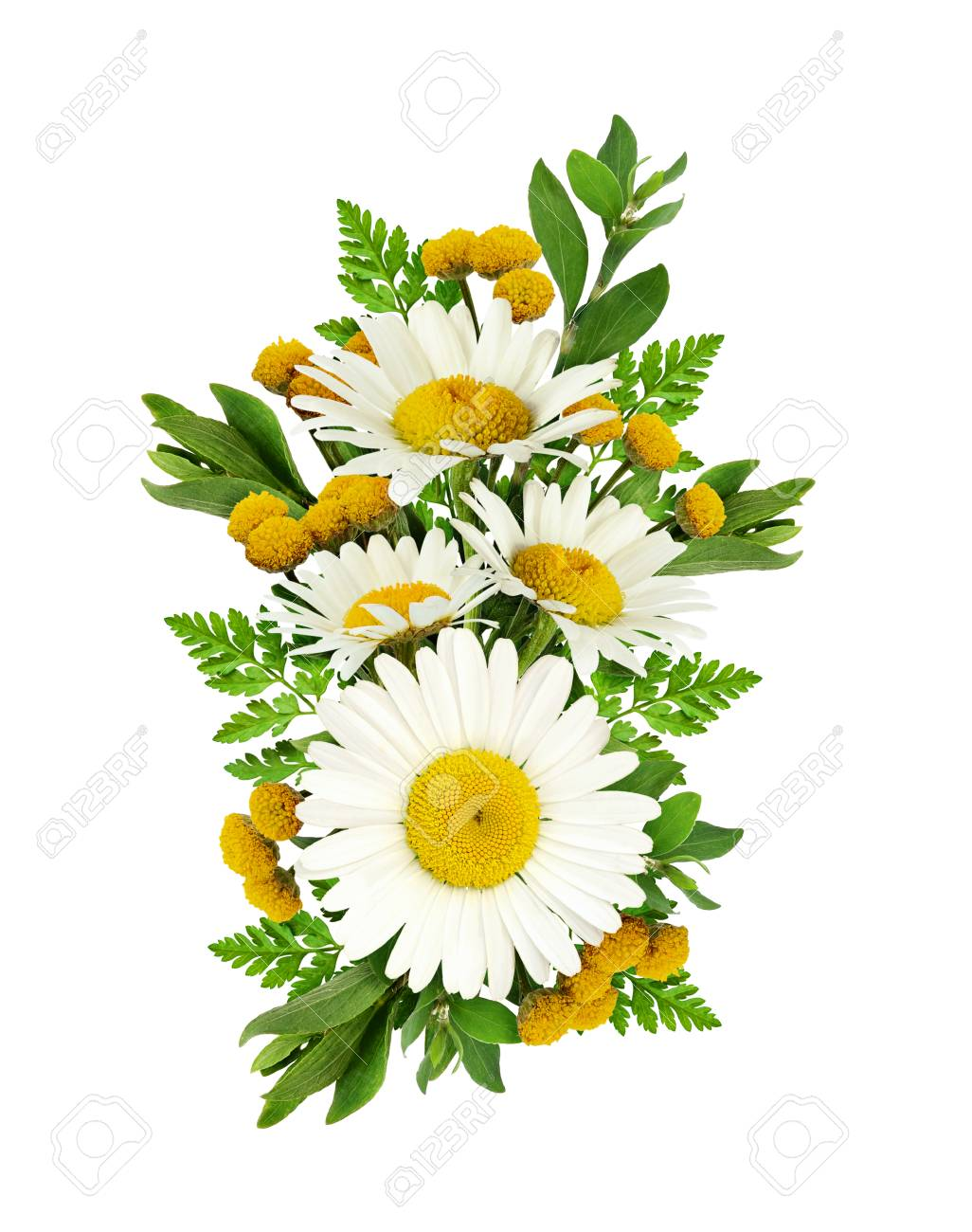 Daisy Flowers Bouquet Isolated On White. Flat Lay. Top View. Stock ...