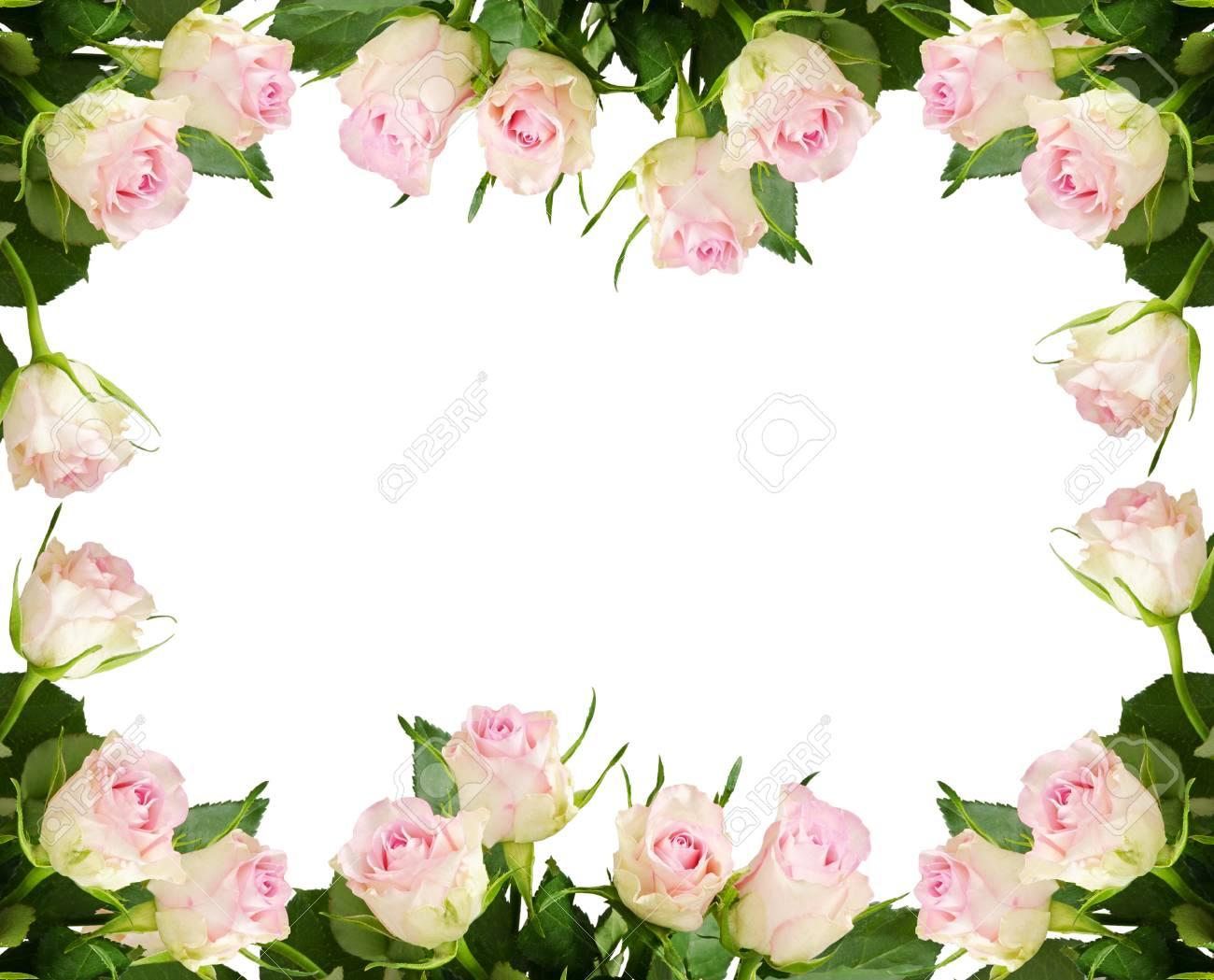 Beautiful White Rose Flowers Frame Isolated On White Background ...