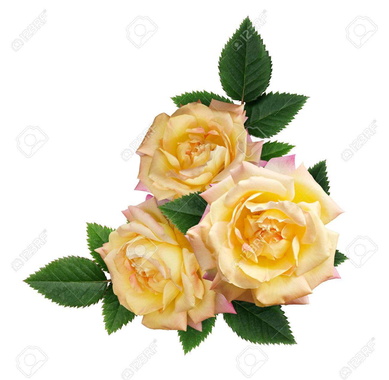 Yellow rose flowers arrangement isolated on white background stock stock photo yellow rose flowers arrangement isolated on white background mightylinksfo