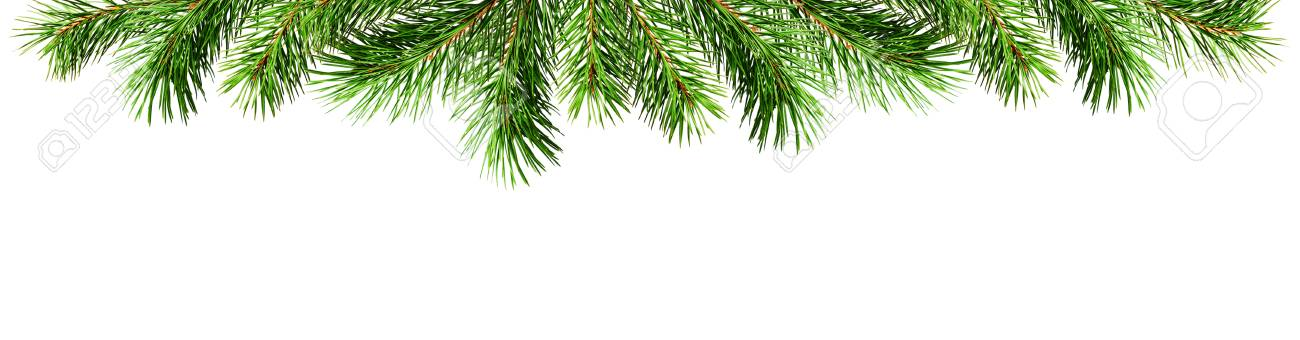 Christmas Top Border.Green Pine Twigs For Christmas Top Border Isolated On White Background