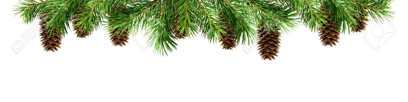 Green Pine Twigs And Cones For Christmas Top Border Isolated On White Background Flat Lay