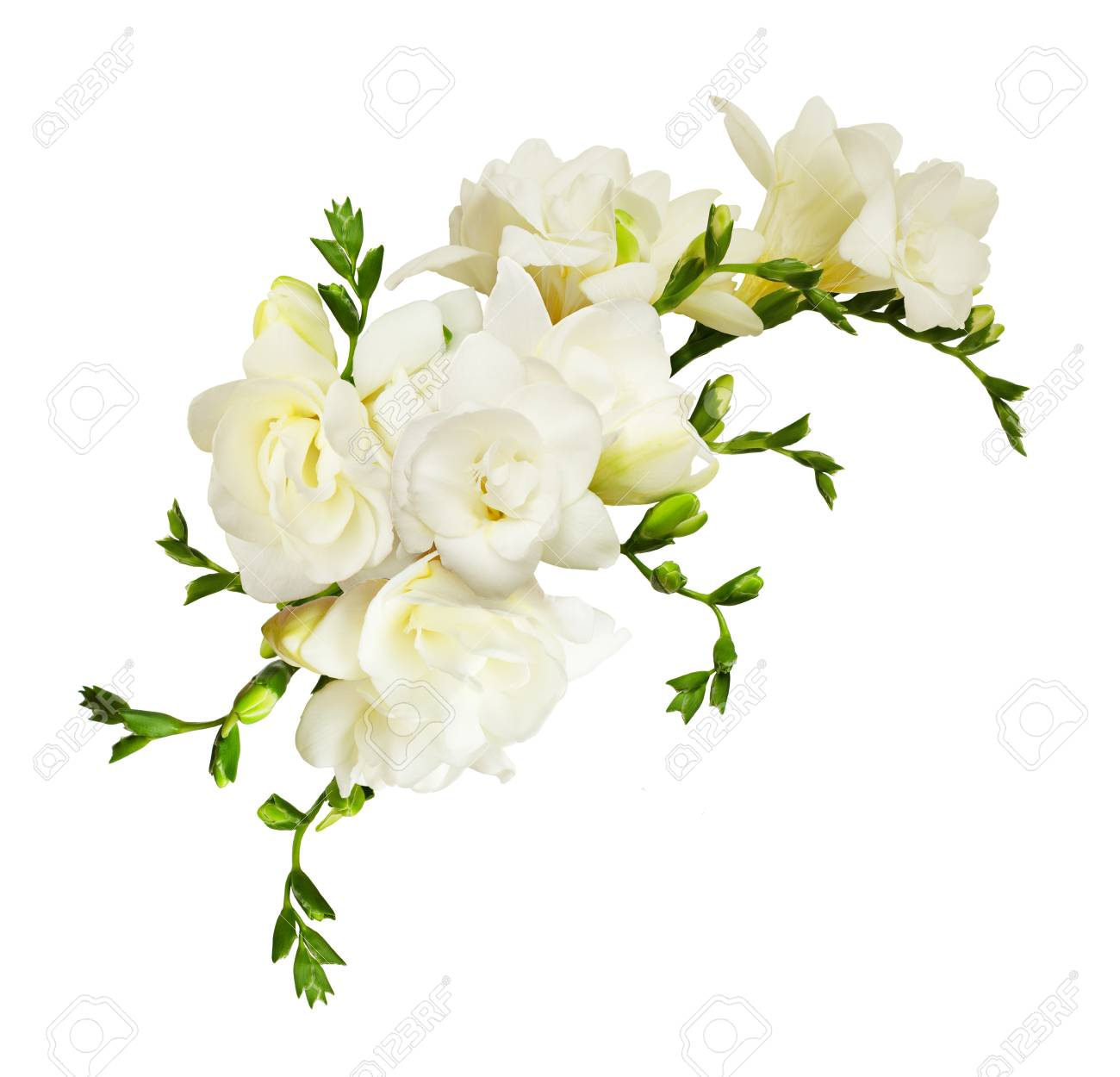 White freesia flowers in a beautiful composition isolated on white background - 96595369