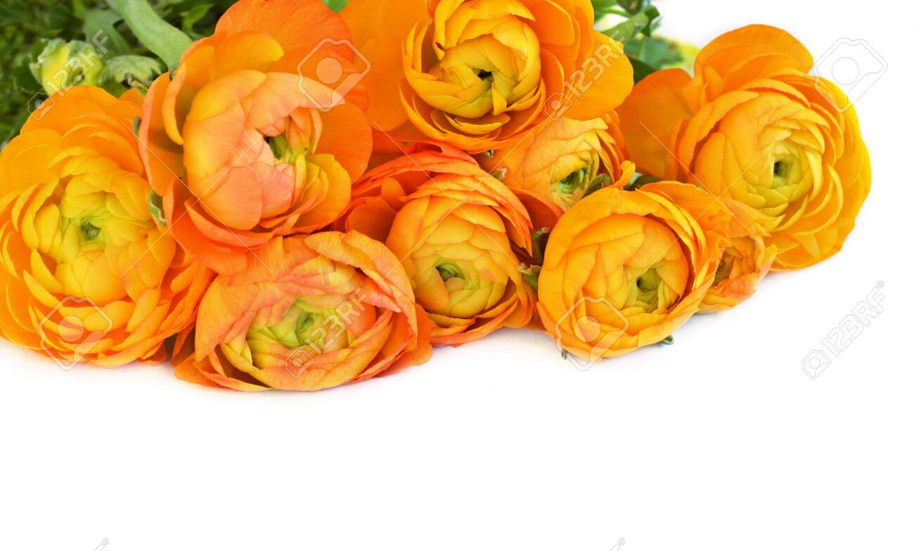 Floral Top Corner With Orange Ranunculus Flowers On White Background Stock Photo Picture And Royalty Free Image Image 117042106