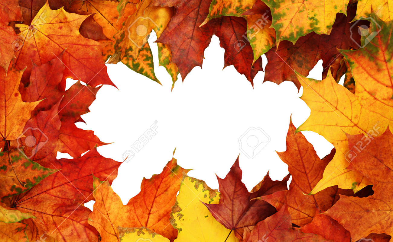 Frame with autumn colorful leaves isolated on white background. Top view. Flat lay. - 125401625