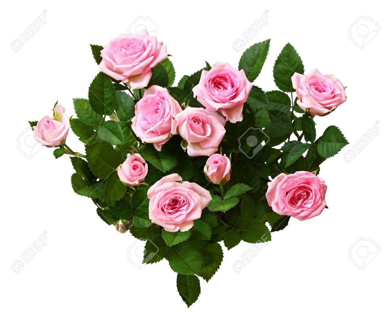 Pink rose flowers in a heart shape arrangement isolated on white - 125401749
