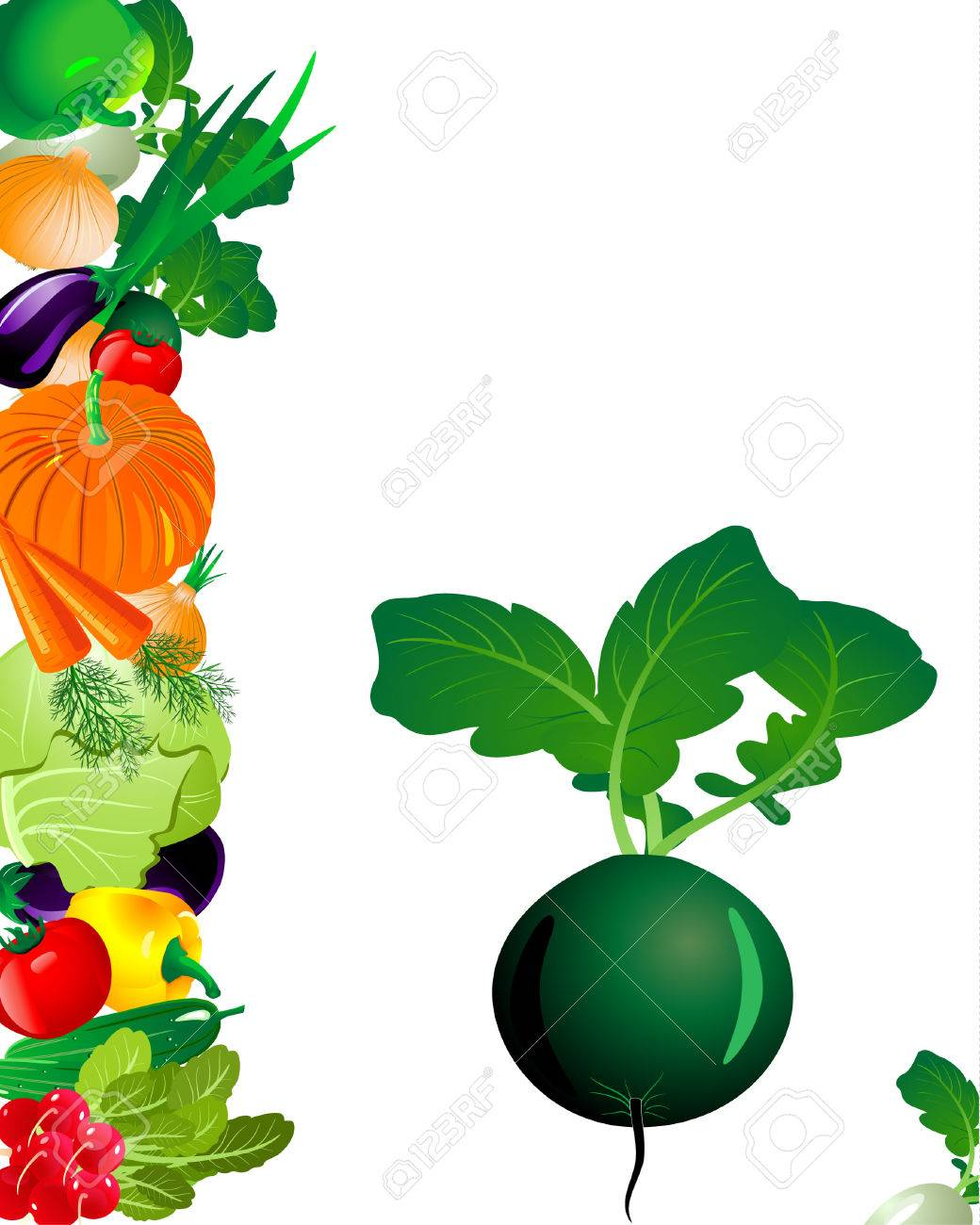 vegetables radish Stock Vector - 6514020